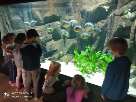 Wizyta oddziału przedszkolnego w Akwarium Gdyńskim